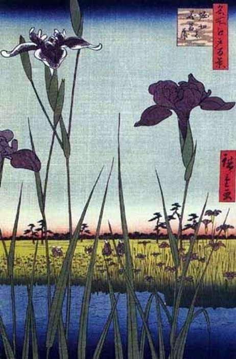 在Horikiri的鸢尾花   Ando Hiroshige