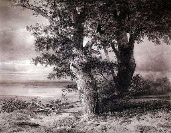 岸上的橡树   阿列克谢萨夫拉索夫