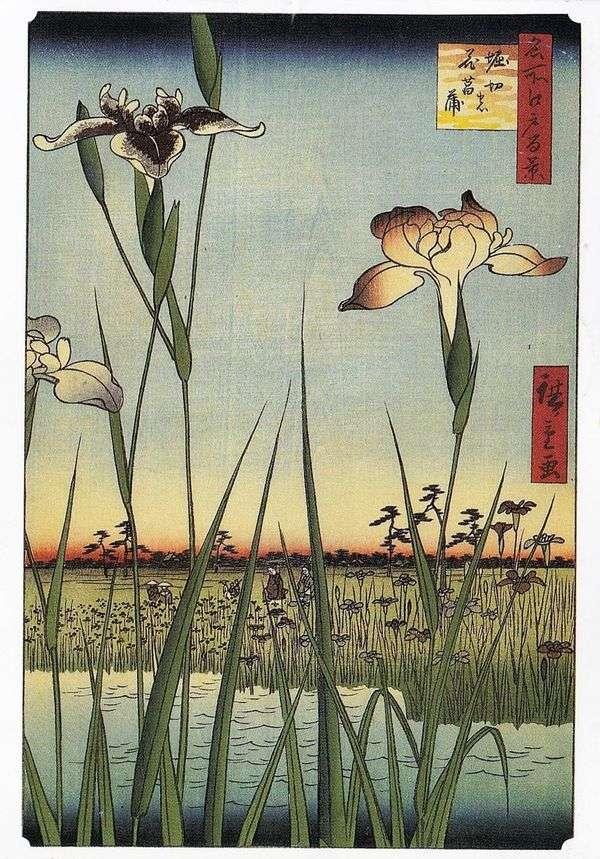 在Horikiri   Utagawa Hiroshige的鸢尾花