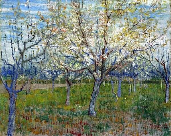 有开花的杏子的果树园   文森特梵高