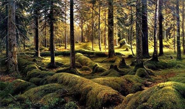 森林公墓   伊万 希什金