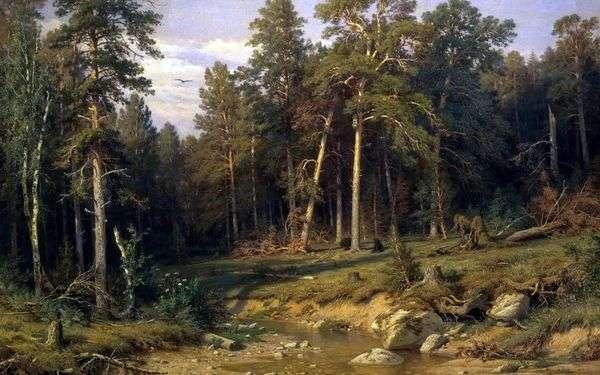 松林。Vyatka省的帆柱森林   伊冯希什金