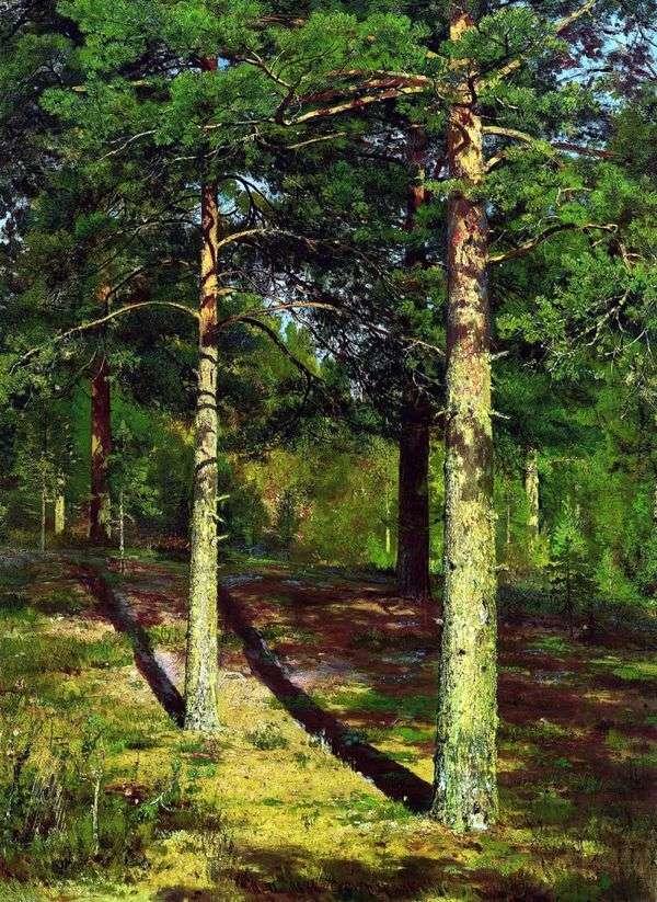 阳光照耀的松树   伊万希什金
