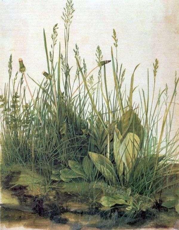 一大块草地   阿尔布雷希特杜勒