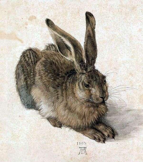 年轻的兔子   阿尔布雷希特Durer